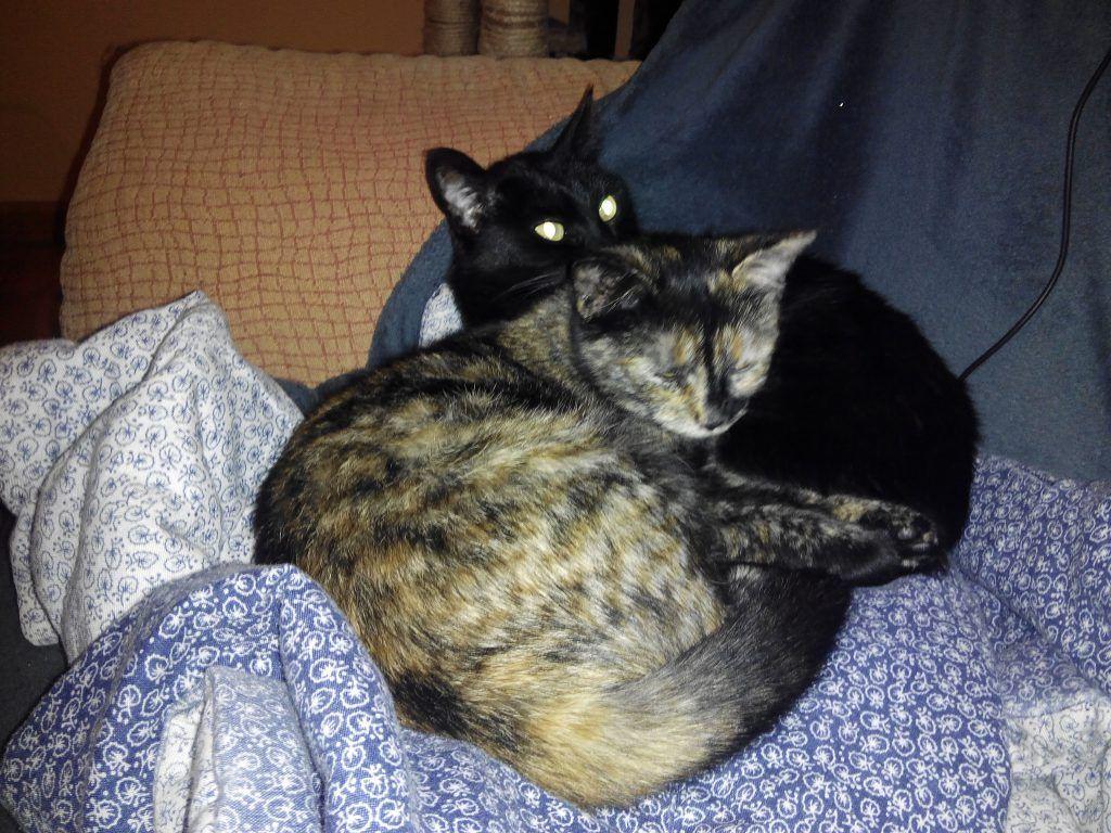 Chloe y Kira juntas durmiendo