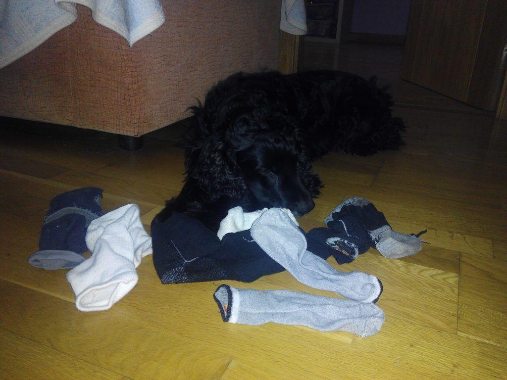 Bruno rodeado de sus más preciosos tesoros, los calcetines.